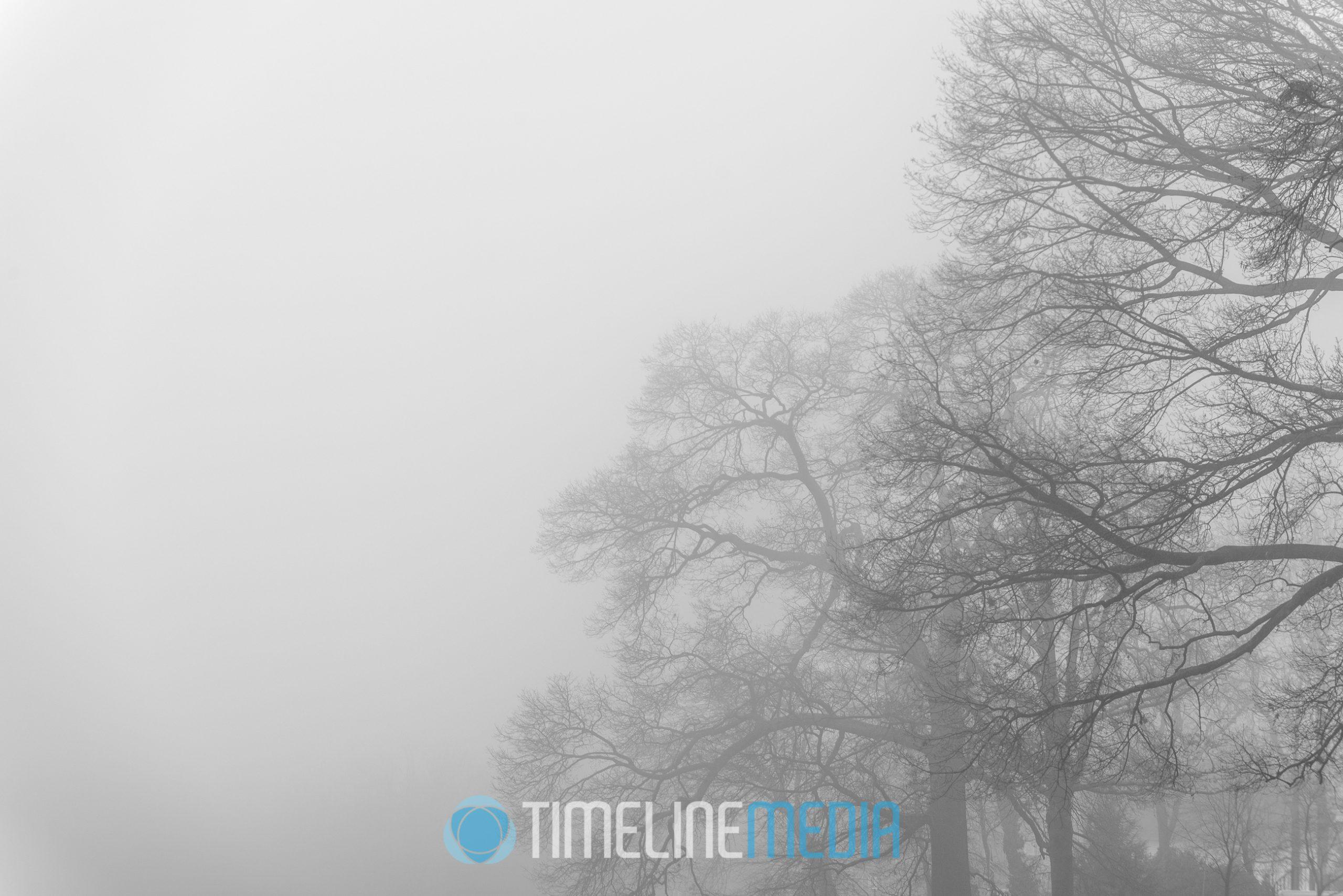 Foggy trees make a minimal composition