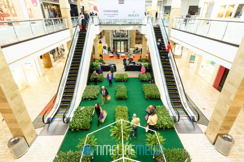 Fashion Court in Tysons Corner Center with the Field of Tulips pop up