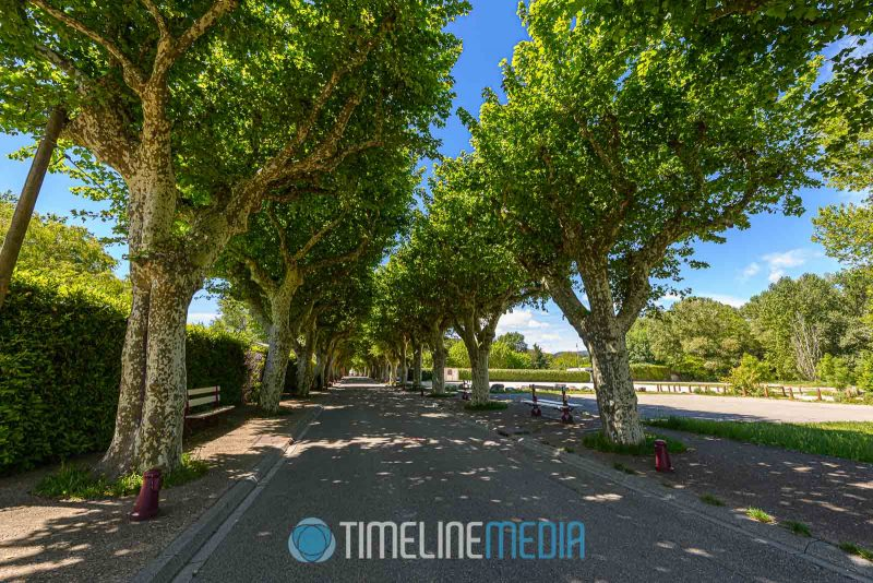 Tree lined street in Viviers, France ©TimeLine Media